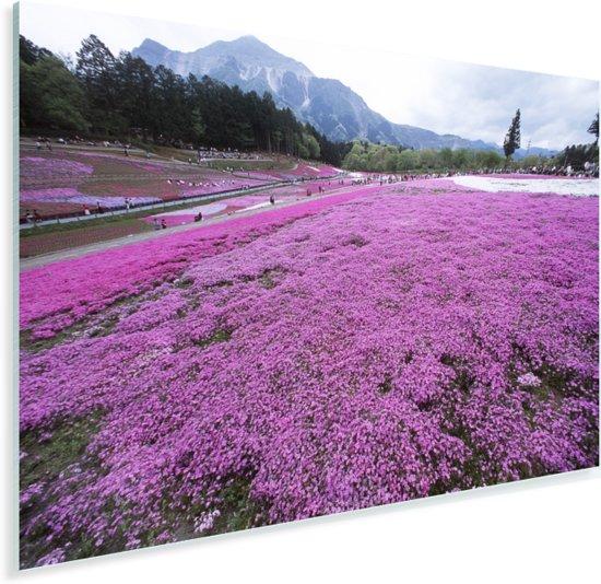 Veld vol met vlammenbloemen in een paars landschap Plexiglas 90x60 cm - Foto print op Glas (Plexiglas wanddecoratie)