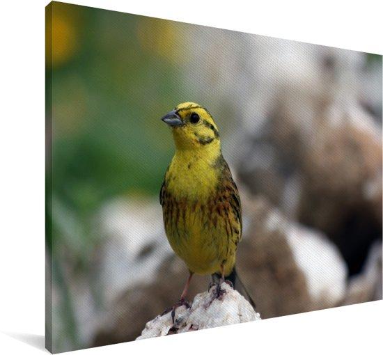 De geelgors zit op een rots Canvas 140x90 cm - Foto print op Canvas schilderij (Wanddecoratie woonkamer / slaapkamer)