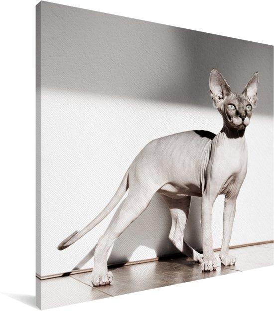Sportieve Sphynx kat met zonnestralen Canvas 90x90 cm - Foto print op Canvas schilderij (Wanddecoratie woonkamer / slaapkamer) / Huisdieren Canvas Schilderijen