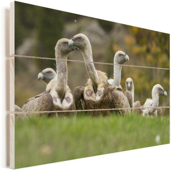 Kudde vale gieren op het veld Vurenhout met planken 90x60 cm - Foto print op Hout (Wanddecoratie)