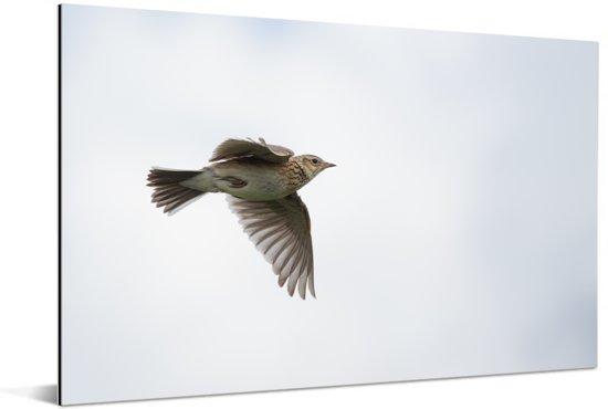 Leeuwerik vliegend door de wolken Aluminium 120x80 cm - Foto print op Aluminium (metaal wanddecoratie)
