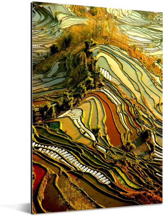 Prachtig kleurenpalet van rijstvelden in China Aluminium 80x120 cm - Foto print op Aluminium (metaal wanddecoratie)