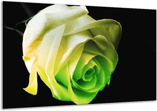 Glasschilderij Roos | Geel, Groen, Zwart | 120x70cm 1Luik | Foto print op Glas |  F003835