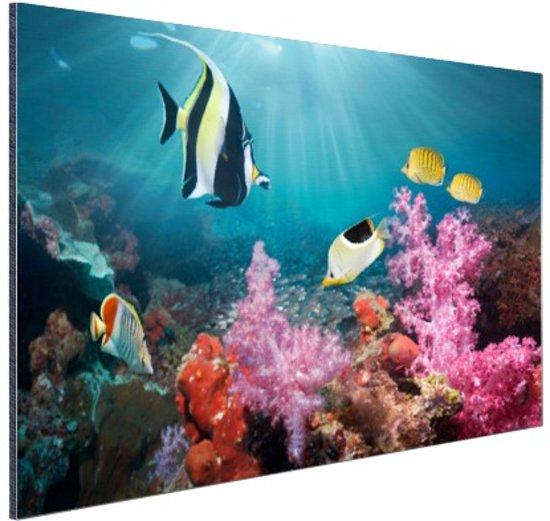 Kleurig koraal Aluminium 30x20 cm - Foto print op Aluminium (metaal wanddecoratie)