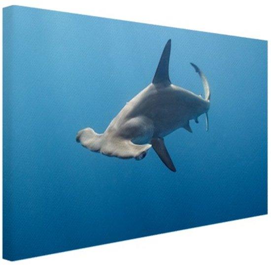 Hamerhaai Canvas 80x60 cm - Foto print op Canvas schilderij (Wanddecoratie)