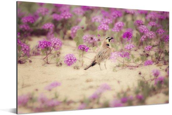 Leeuwerik omringt door de knalroze bloesems Aluminium 90x60 cm - Foto print op Aluminium (metaal wanddecoratie)