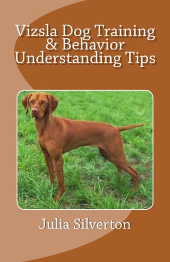 Vizsla Dog Training & Behavior Understanding Tips
