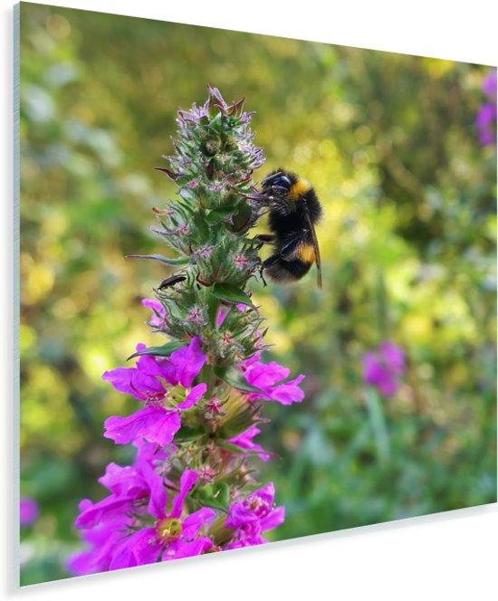 Hommel bevindt zich tussen de wilde bloemen Plexiglas 90x90 cm - Foto print op Glas (Plexiglas wanddecoratie)