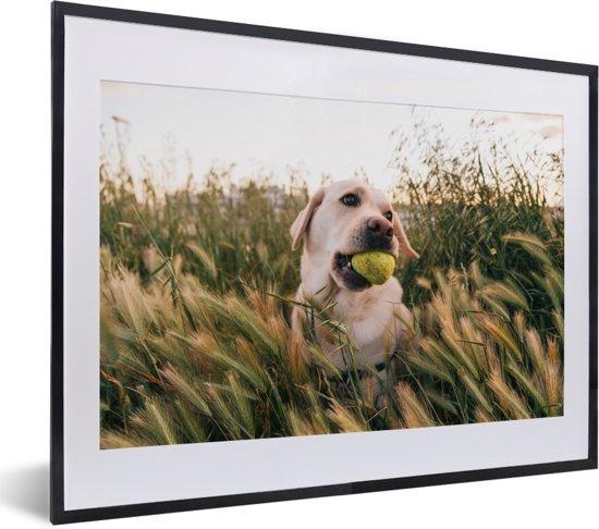 Foto in lijst - Labrador Retriever speelt met een tennisbal tussen het gras fotolijst zwart met witte passe-partout klein 40x30 cm - Poster in lijst (Wanddecoratie woonkamer / slaapkamer)