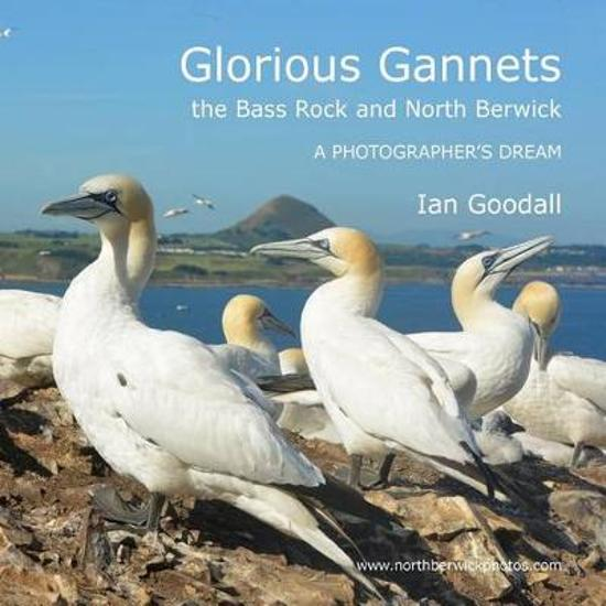 Glorious Gannets, the Bass Rock and North Berwick