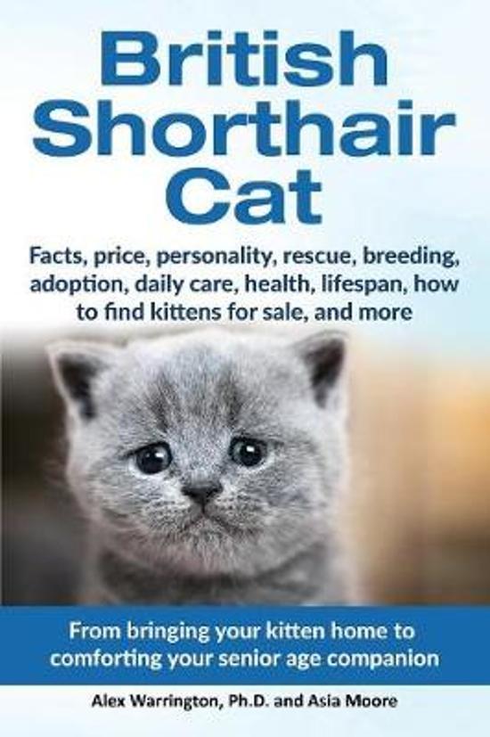 Bol British Shorthair Cat Alex Warrington Ph D