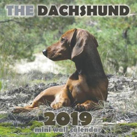 The Dachshund 2019 Mini Wall Calendar
