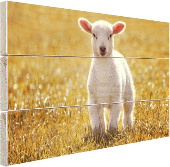 FotoCadeau.nl - Een jong lam Hout 80x60 cm - Foto print op Hout (Wanddecoratie)