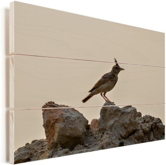 Leeuwerik die zich op een zandhoop bevindt in India Vurenhout met planken 60x40 cm - Foto print op Hout (Wanddecoratie)