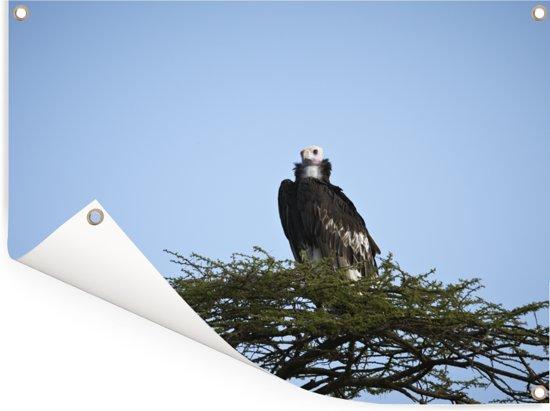 Een oorgier zit alleen op zijn nest Tuinposter 160x120 cm - Tuindoek / Buitencanvas / Schilderijen voor buiten (tuin decoratie) XXL / Groot formaat!
