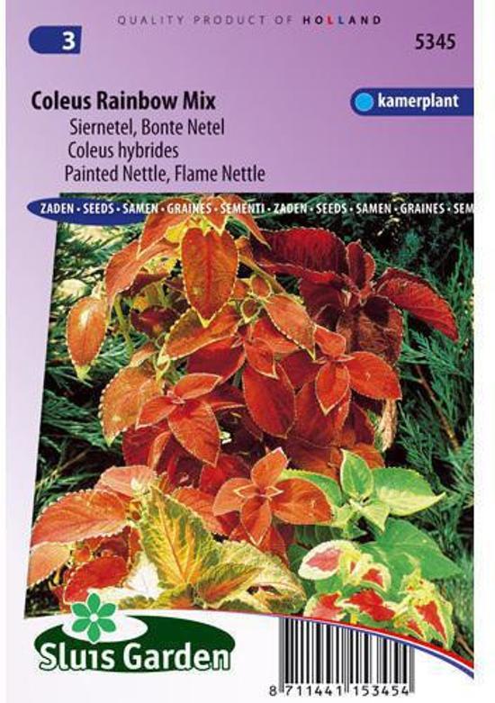 Sluis Garden Siernetel Rainbow Mix Market Growers (coleus)