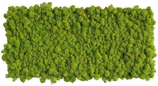 reindeer moss picture 57 x57 CM voorjaar