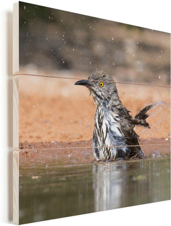 Rosse spotlijster neemt een bad in een vijver Vurenhout met planken 20x20 cm - klein - Foto print op Hout (Wanddecoratie)