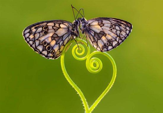Fotobehang Only Love Matters|V8 - 368cm x 254cm|Premium Non-Woven Vlies 130gsm