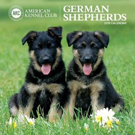 German Shepherds American Kennel Club 2018 Wall Calendar