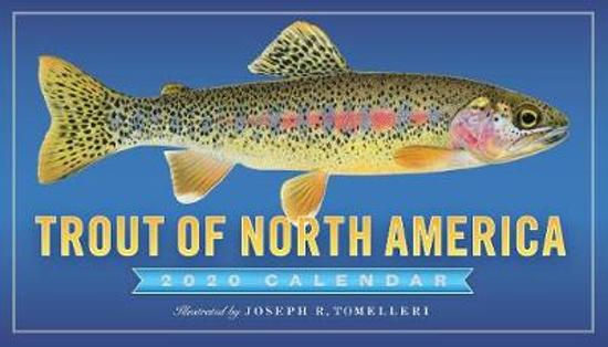 CAL 20 TROUT OF NORTH AMER