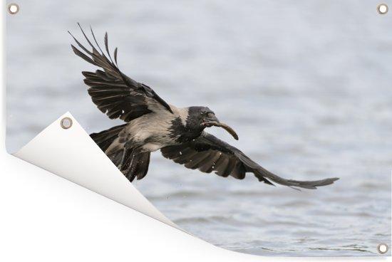 De bonte kraai spreidt zijn vleugels tijdens de vlucht Tuinposter 120x80 cm - Tuindoek / Buitencanvas / Schilderijen voor buiten (tuin decoratie)