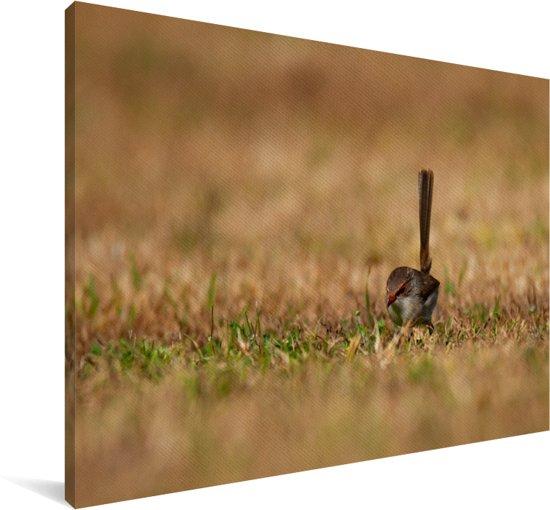 Winterkoning zoekt voedsel in het bruine gras Canvas 90x60 cm - Foto print op Canvas schilderij (Wanddecoratie woonkamer / slaapkamer)