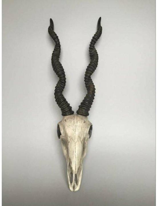 Antilope schedel met gewei - wit - hangend