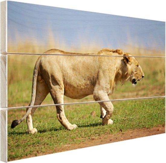 Jonge wilde mannelijke leeuw Hout 60x40 cm - Foto print op Hout (Wanddecoratie)