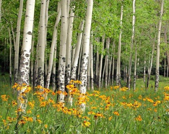 Papermoon Aspen Grove and Orange Wildflowers Vlies Fotobehang 200x149cm 4-Banen