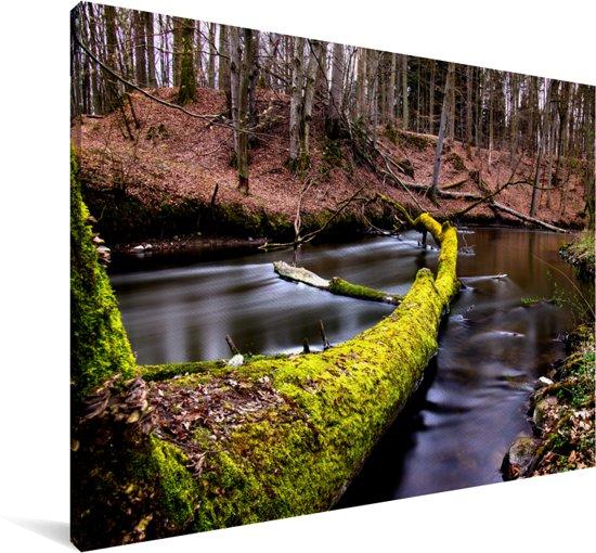 Oude boom in een beekje in het Nationaal Park Drawa in Polen Canvas 180x120 cm - Foto print op Canvas schilderij (Wanddecoratie woonkamer / slaapkamer) XXL / Groot formaat!