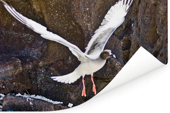 Een Zwaluwstaartmeeuw vliegt tussen de rotsen Poster 60x40 cm - Foto print op Poster (wanddecoratie woonkamer / slaapkamer)