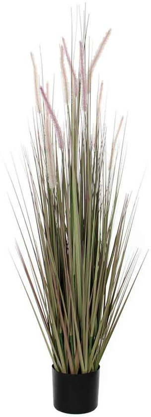Mica Decorations dogtail gras paars in plastic pot d17 - 15