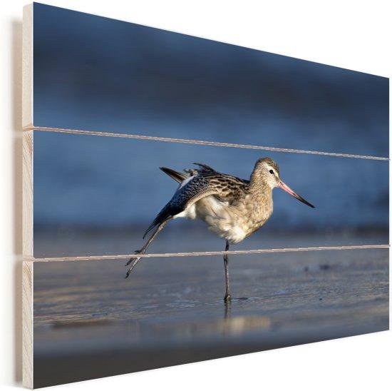 Rosse grutto strekt zijn vleugels op het strand Vurenhout met planken 60x40 cm - Foto print op Hout (Wanddecoratie)