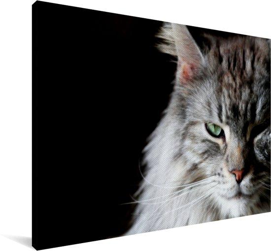 Portret van een grijs gekleurde Maine Coon kat Canvas 140x90 cm - Foto print op Canvas schilderij (Wanddecoratie woonkamer / slaapkamer) / Huisdieren Canvas Schilderijen