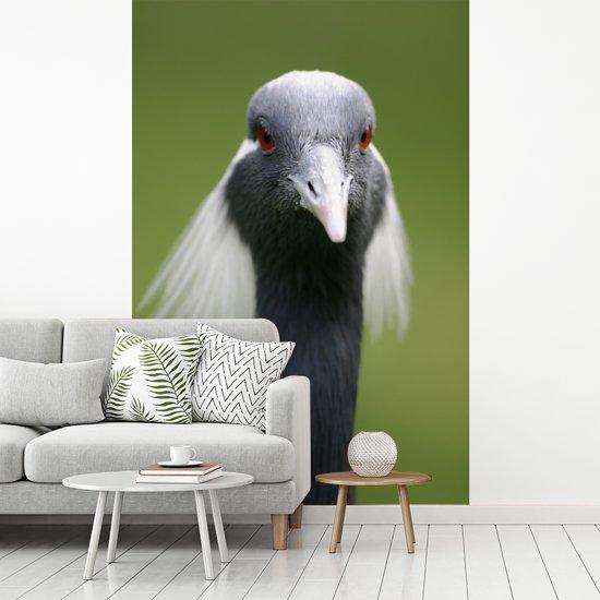 Fotobehang vinyl - Dierenportret van de kop van een jufferkraanvogel breedte 240 cm x hoogte 360 cm - Foto print op behang (in 7 formaten beschikbaar)