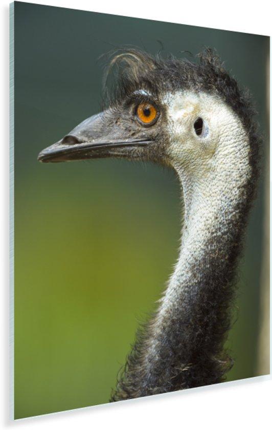 Portret van een emoe met oranje ogen Plexiglas 60x90 cm - Foto print op Glas (Plexiglas wanddecoratie)