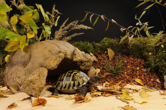 Exo Terra Schildpadden Grot