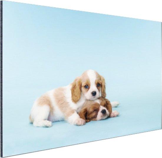 Twee slaperige pups Aluminium 120x80 cm - Foto print op Aluminium (metaal wanddecoratie)