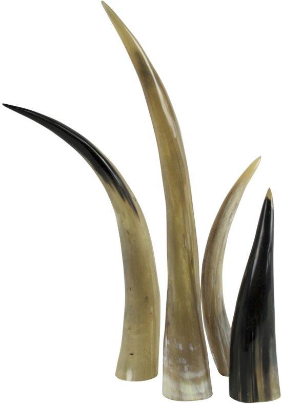 Hoorn 55cm (bison Bison)