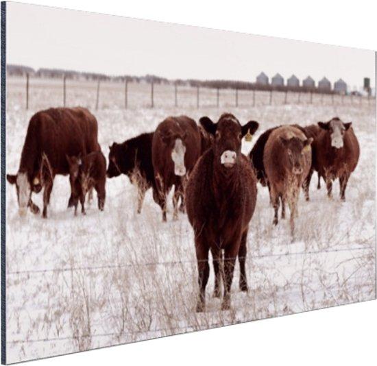 Kudde koeien in een sneeuwveld Aluminium 60x40 cm - Foto print op Aluminium (metaal wanddecoratie)