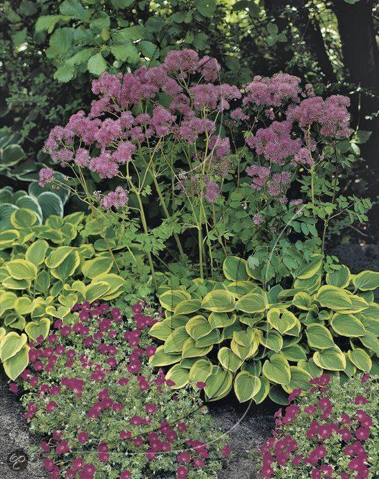 Planten Voor In De Schaduw.Bol Com Schaduw Planten Collectie
