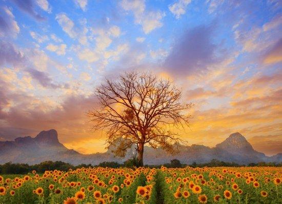 Papermoon Sunflower Field Vlies Fotobehang 250x186cm 5-Banen