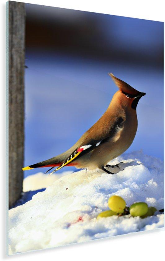 Pestvogel in de sneeuw met druiven Plexiglas 120x180 cm - Foto print op Glas (Plexiglas wanddecoratie) XXL / Groot formaat!
