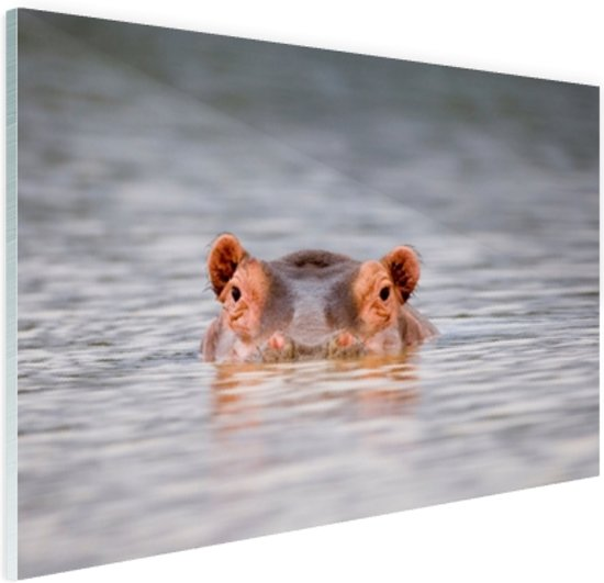 Nijlpaard close-up boven water Glas 30x20 cm - klein - Foto print op Glas (Plexiglas wanddecoratie)