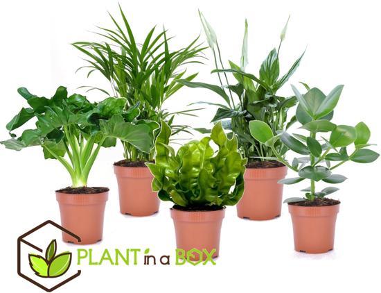PLANT IN A BOX Luchtzuiverende kamerplanten mix - Set van 5 stuks - Hoogte ↕ 30 - 40 cm