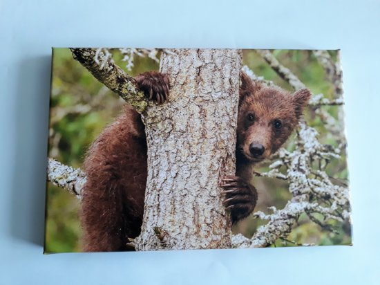 bol | grizzly beer op canvas 20x30x2cm