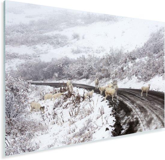 Dalschapen op de weg langs het besneeuwde landschap van het nationaal park Denali Plexiglas 60x40 cm - Foto print op Glas (Plexiglas wanddecoratie)