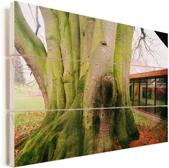 Dikke boom voor het Louisiana Museum of Modern Art Vurenhout met planken 120x80 cm - Foto print op Hout (Wanddecoratie)