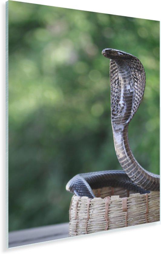 Een magische Cobra in een rietenmand Plexiglas 80x120 cm - Foto print op Glas (Plexiglas wanddecoratie)